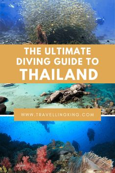 Koh Tao's most experienced PADI Course Director Matt Bolton welcomes you to the beautiful island of Pacific Destinations, Thailand Destinations, Thailand Travel Guide, Travel Destinations, Diving Thailand, Visit Thailand, Phuket Thailand, Phuket Travel, Bangkok Travel