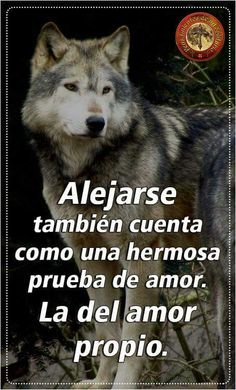Spanish Inspirational Quotes, Spanish Quotes, Wolf Life, Wedding Readings, Wolf Quotes, Badass Quotes, Cartoon Pics, Business Motivation, Werewolf