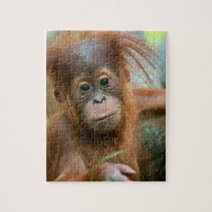 Shop Cute Baby Orangutan looking straight ahead Jigsaw Puzzle created by AndreMichel. Baby Pangolin, Cute Baby Monkey, Baby Orangutan, Childrens Gifts, Cute Elephant, More Cute, Animals For Kids, Gifts For Kids, Kittens