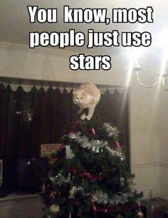 Not Crazy Cat Ladies...