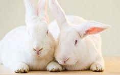 2 Rabbits Bonding