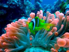 Barreira de Coral - Austrália