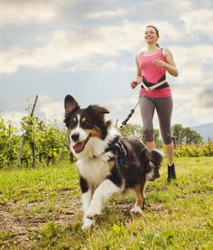 6 Best Exercises to Do With Your Dog