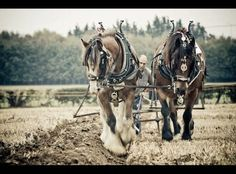 Heavy Horse Ploughing Match at Farming World 2009 by Tony Golding