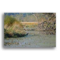 Lone Heron at the Wetland Preserve