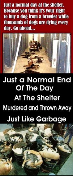 This makes my blood boil. Every person who buys from a pet store, or dumps their family members at the shelter, should be made to look at this photo everyday.