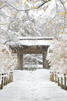Temple in the snow, Meigetuin, Kamakura, Kanagawa, Japan