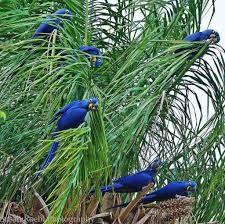 Resultado de imagem para pantanal brazil