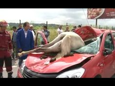 ▶ Horse Car Accident Incredible Footage - YouTube
