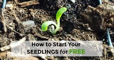 How we start our seedlings for free #gardening #garden #gardens #DIY #landscaping #home #horticulture #flowers #gardenchat #roses #nature