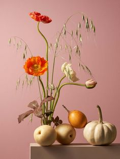 Maciek Miloch Floral 'Feast' Compositions – Trendland Online Magazine Curating the Web since 2006 Floral Photography, Artistic Photography, Life Photography, Still Photography, Still Life Photos, Still Life Art, Still Life Photographers, Different Plants, Art Inspo