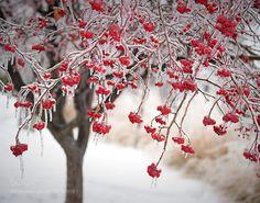 Frozen by lilymarkovic #nature #mothernature #travel #traveling #vacation #visiting #trip #holiday #tourism #tourist #photooftheday #amazing #picoftheday