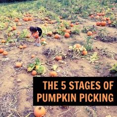 The 5 Stages of Pumpkin Picking | parenting humor and LOLs for mom by Kim Bongiorno