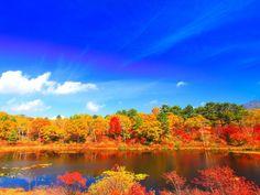 志賀高原の一沼と蓮池@長野県山ノ内町