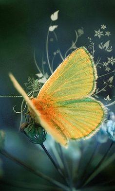 **Butterfly Beauty