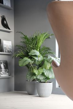 Green plants concrete pots via @stylizimo