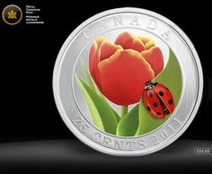 Every spring, tulips from Holland bloom in Canada, home of the world's largest tulip festival. The flowers are a telltale sign of spring & symbol of friendship between nations  A pretty, brightly-coloured ladybug inhabiting a vibrant tulip in the spring are both warmly welcomed by gardeners as harbingers of spring. The 2 share a unique relationship. The ladybug uses the tulip as shelter from predators & for sustenance  And the ladybug (nature's most effective pesticides) keeps the tulips…