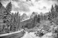 Passing through the dense forest in the Gosau region in Austria. Hallstatt, Take Me Home, Small Towns, Black And White Photography, Trekking, Austria, Cruise, Travel Photography, Places To Visit