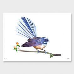 Fantail Art Print by Yhodesign