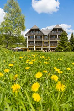 Hotel im Naturpark Almenland Cabin, House Styles, Decor, Water Pond, Places, Vacation, Nature, Nice Asses, Decoration