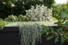 ℳ silver falls Australian Garden Design, Australian Native Garden, Gravel Garden, Garden Beds, Garden Plants, Flower Landscape, Landscape Design, Coastal Gardens, Modern Gardens