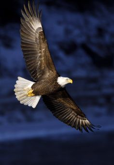 """""""But they that wait upon the Lord shall renew their strength; they shall mount up with wings as eagles; they shall run and not be weary; they shall walk and not faint."""" Isaiah 40:31"""