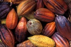 Cocoa Beans production involves many steps. Gyarko farms are one of the best cocoa beans exporter in Ghana.Top rated premium cocoa beans producer in Ghana St Lucia Island, Kid Friendly Meals, Things To Know, Eggplant, Harvest, Caribbean, Beans, Healthy Eating, Pumpkin