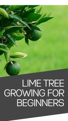Veg Garden, Fruit Garden, Garden Trees, Edible Garden, Lawn And Garden, Garden Plants, Indoor Plants, Bucket Gardening, Gardening Hacks