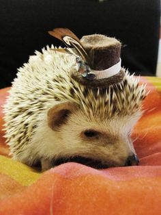 hedgehogs wearing hats - Google Search no dissappointment
