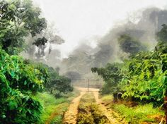A closed gate at the end of a rough dirt path through greenery in a nature park. This is the kind of path that is made through the pressure of vehicle tyres, which means that more vehicles tend to follow the same path and make it deeper. There is a mist and fog type effect in the air, and the place is full of greenery.
