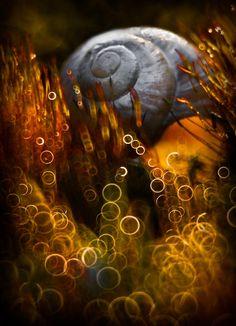 Les macrophotographies de nature de Magda Wasiczek  2Tout2Rien