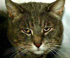 Please save sweet Calli. From death.visit  pets on deathrow on facebook New York City URGENT