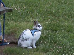 I saw this bunny for a walk in the park!!  cute.  Never saw a bunny in a harness before.    Check out the new page that I made of our 10K Challenge project and some other recommendations!  http://122walnut.com/
