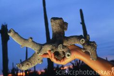 Sample of fulgurite, sand fused by lightning - Stock Image - Crystals And Gemstones, Stones And Crystals, Theories About The Universe, Electric Universe, Lightning Strikes, Crystal Skull, Science And Nature, Rocks And Minerals, Fossils
