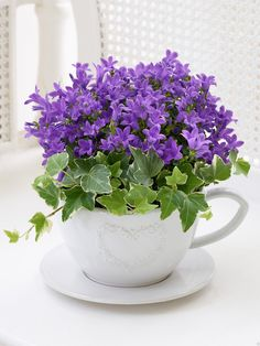 Ana Rosa flowers for Marsha! Summer Flowers, Purple Flowers, Beautiful Flowers, Teacup Flowers, Plantas Bonsai, Decoration Plante, Balcony Decoration, Container Gardening, House Plants
