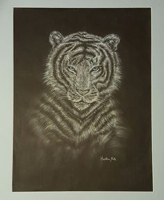 """""""Arctic Tiger"""" done in charcoal by Heather M Custom Mats, Holiday Photos, Photo Contest, More Photos, Arctic, Conservation, Charcoal, Lion Sculpture, Statue"""