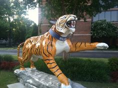 "See 128 photos and 52 tips from 1663 visitors to The University of Memphis. ""A cool fact about the tiger statue in front of the UC, is that it use to. Memphis Tigers, Black Tigers, Hunts, College Life, University, Blue, Animals, Animales, Animaux"