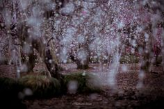 Hidenobu Suzuki Captured Spring In Japan