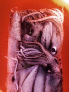 Image for Block of squid