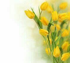 Pin Von Tm Auf Kwiaty