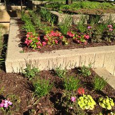 Flower pots galore