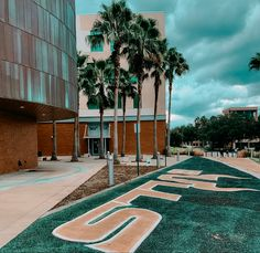 30 Usf Ideas Usf University Of South Florida Usf Bulls