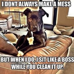 I dont Always make a mess but when i do, I sit like a boss while you clean it up.