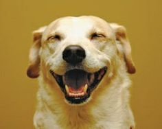 Good Teeth Can Promote Good Health in Your Dog | The Bark