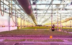 7 myths about grow lights you should know.  #growyourown #hydro #greenhouse #garden #gardening #homegrown
