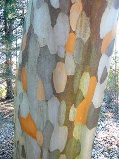 Strange Tree Bark by Stanley Zimny, via Flickr