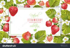 Vector strawberry horizontal banner on white background. Design for fruit tea, sweets and pastry filled with berry, dessert menu, health care products, perfume, aromatherapy. With place for text