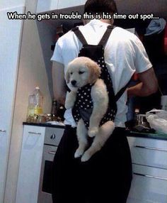 Doggie carrier