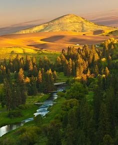 dyingofcute:    Golden Sunrise: Palouse River / Steptoe Butte - Washington, USA