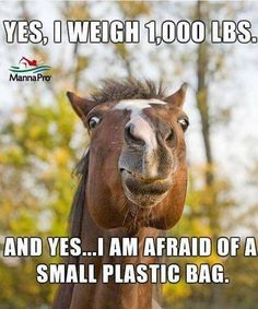 HAHA!! Accurate. My horse FREAKS when he sees anything move suddenly or unexpectedly.